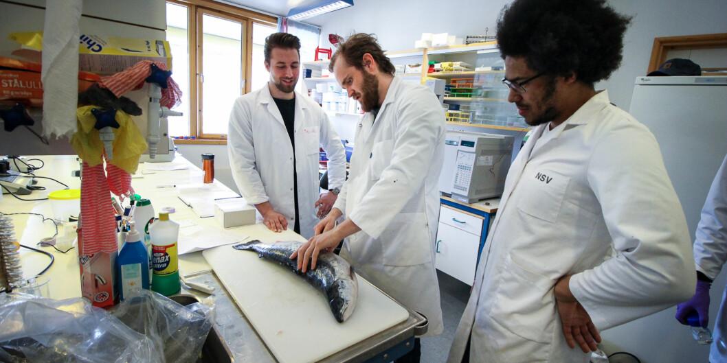 Kristian Sørmo, Mikael Fjell og Simon Siiri studerer akvamedisin og blir vetrinærer for fisker når de er ferdig med utdanningen. De tror økningen i antall studenter blant annet skydles nedgangen ioljebransjen.