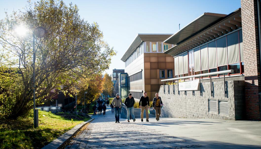 Det er på tampen at 48 år gamle Universitetet i Tromsø kan hevde seg på rankinglista over de beste unviersitetene i verden under 50 år. Bildet er fra campus iBrevika. Foto: Skjalg Bøhmer Vold