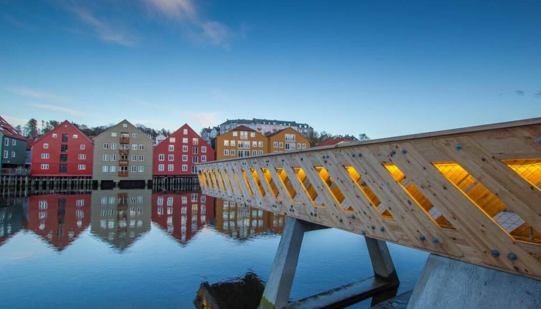 Arkitekturprosjekter gjennom NTNU Live Studio fikk årets utdanningskvalitetspris fra NOKUT. Denne 12 meter lange utkikksbroen over Nidelven er et av prosjektene som er gjort gjennom Live Studio. Foto: SophieLabonnote