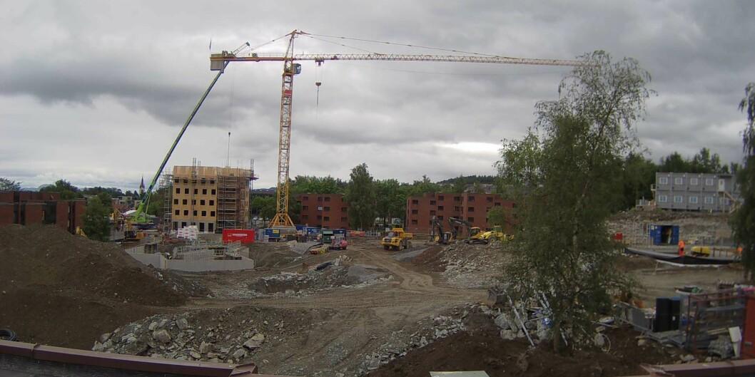 Over 600 nye studentboliger skyter i disse dager opp av bakken på Moholt studentby i Trondheim. Byggkamera: Samskipnaden i Trondheim(SiT)