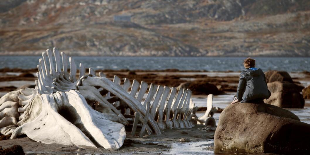 """Ett av de mest kjente og brukte bildene fra den russiske filmen Leviathan som har Norgespremiere i dag. <span class=""""caps"""">FOTO</span>:Arthaus"""