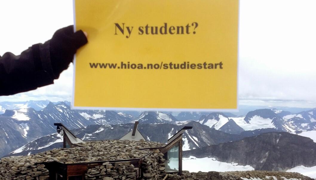 Gul plakat på vandring som varsler studiestart. Søndag 4. august nådde den nye høyder. Norges topp, nærmere bestemtGaldhøpiggen. Foto: SK/HiOA