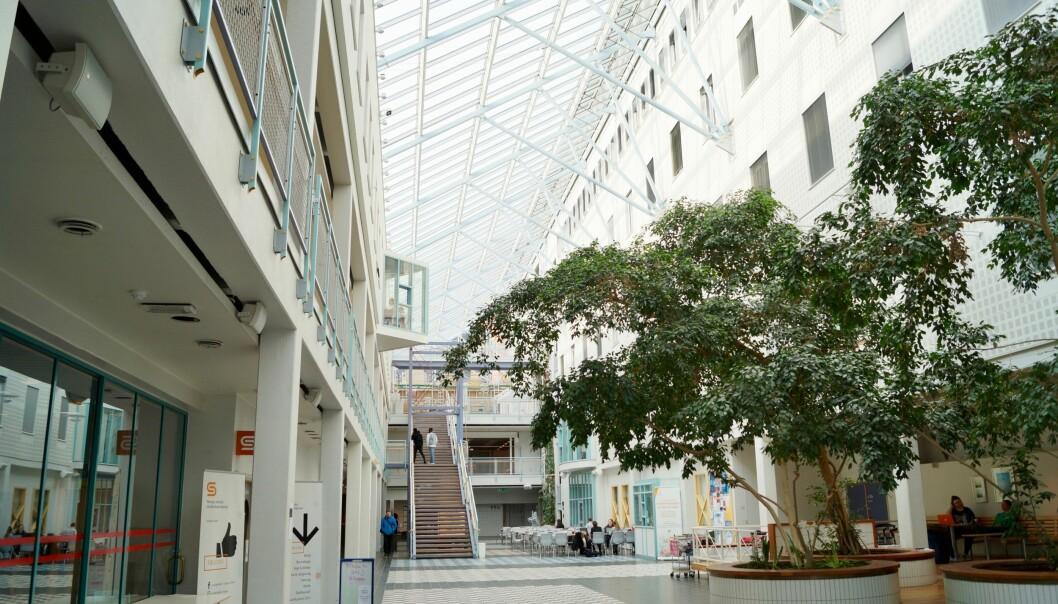 Universitetsstyret ved UiT vedtok tirsdag å samorganisere Kunstfakultetet med Tromsø museum, stikk i strid med innstillingen fra universitetsdirektøren. Foto: Lars Åke Andersen