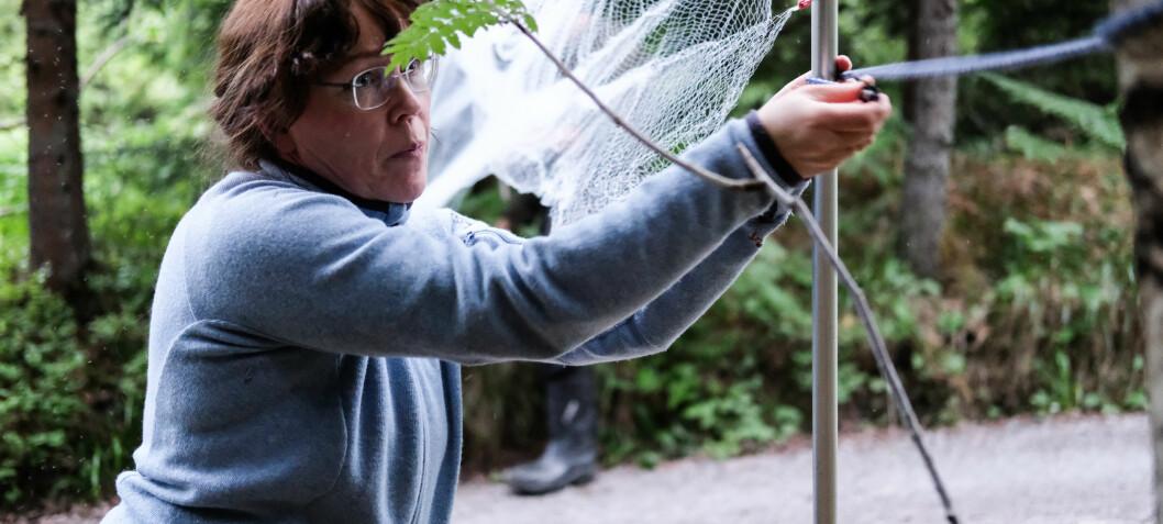 Forskerjakt på flaggermus