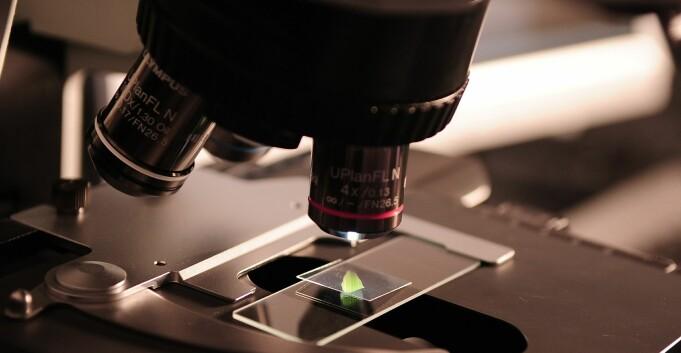 Resultatorientert forsking rammer grunnforskningen