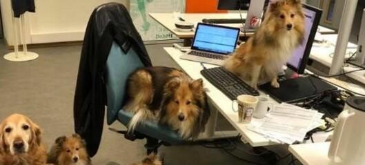 OsloMet skjerper inn hundeforbud