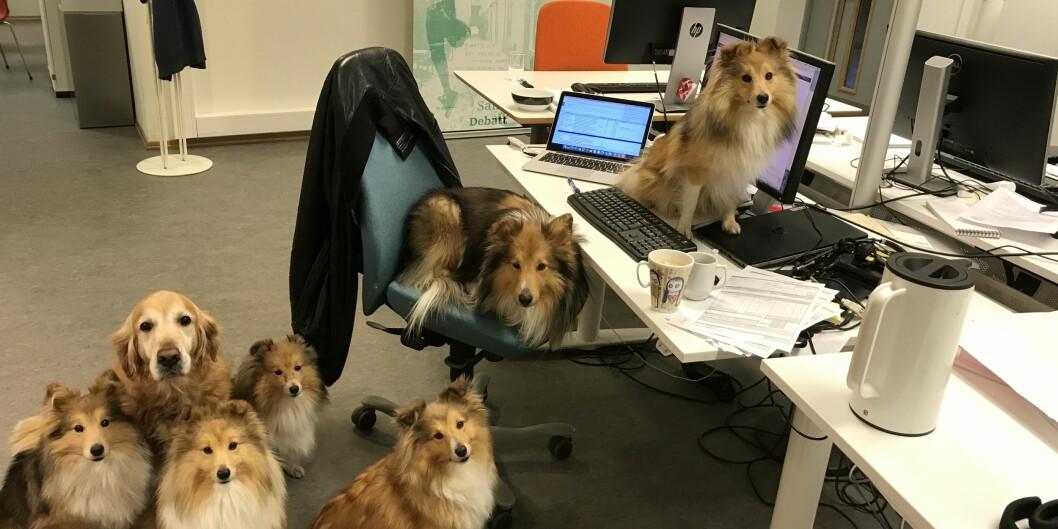 Det er ikke lov å ha med hunder på jobben på OsloMet, en regel som ikke alltid overholdes. Her fra Khronos egne lokaler i Pilestredet 42. Foto: Eva Tønnessen