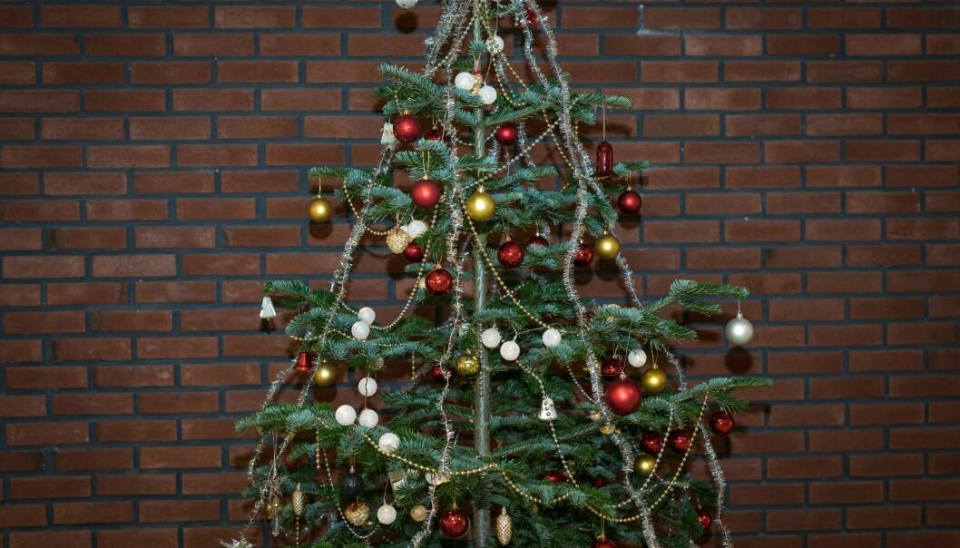 Det vanligste juletreet er vanlig, norsk gran, men edelgran (som på bildet) og fjelledelgran har blitt veldig populære de senere årene.