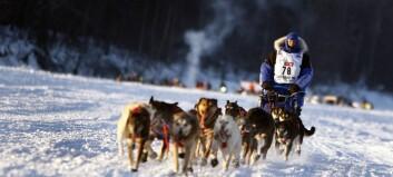 Utvida samarbeid bak ny bok om hundekjøring
