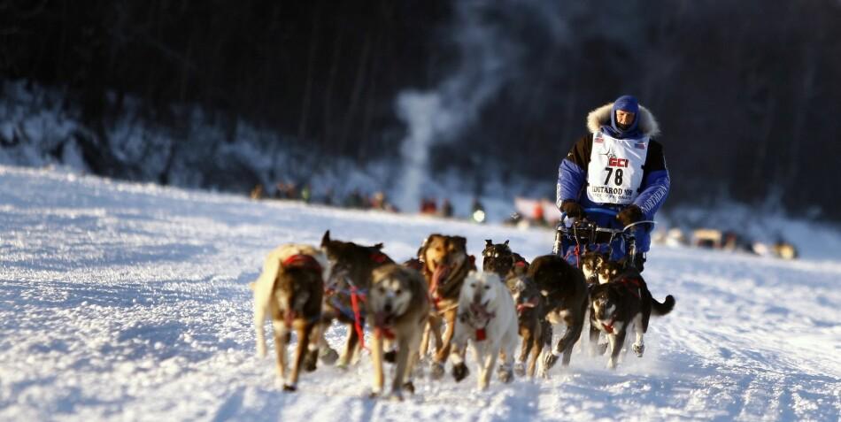 Det å komme i mål ses på som en seier i seg selv, sier Knut Skjesol, som har forsket på hundekjørere. Foto: Pixabay