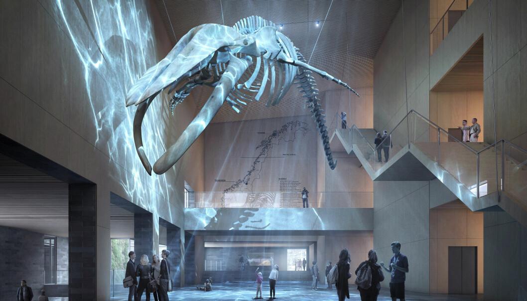 Det skal endelig bli plass til museets store blåhvalskjelett, som nå er utlånt til et museum i Japan. Illustrasjon: Henning Larsen Architects