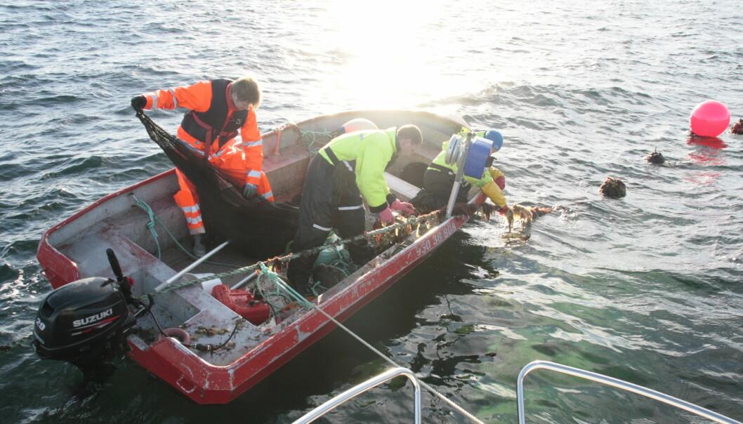 God forvaltning av havet føreset naturvitskapleg kunnskap som t.d. forsking på miljøgifter som utgangspunkt for internasjonale avtalar, skriv Mestad og Gornitzka.
