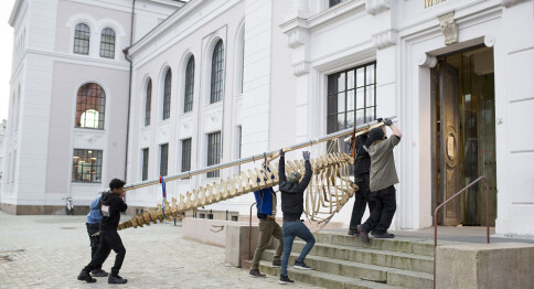 Desse 15 har søkt stilling som museumsdirektør i Bergen