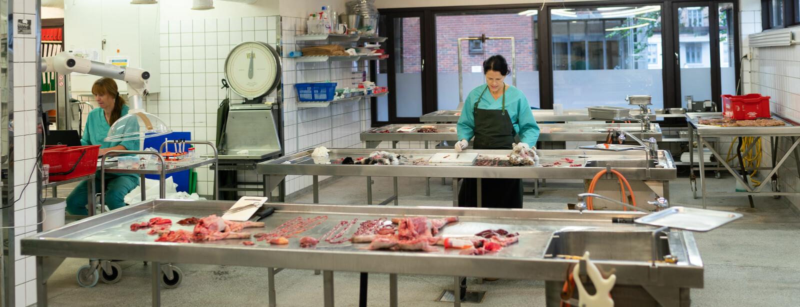 Overingeniør Ingunn Ruud (t.v.) og patolog Helene Wisløff obduserer og tek prøver av ulike dyreslag som ligg på rekke og rad på benkane. Foto: Ketil Blom Haugstulen.