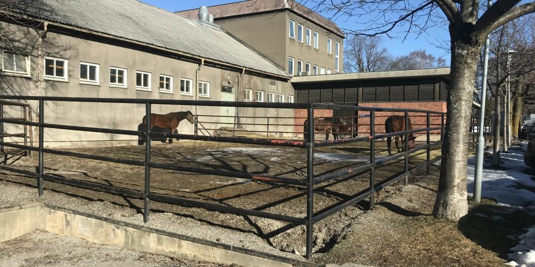 Hester i luftegård på Veterinærhøgskolen mars 2019. Foto: Eva Tønnessen