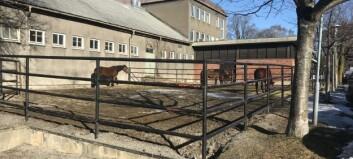 Salmonella påvist på hesteklinikk