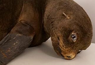 Her er dyrene som ikke får komme tilbake til Universitetsmuseet i Bergen