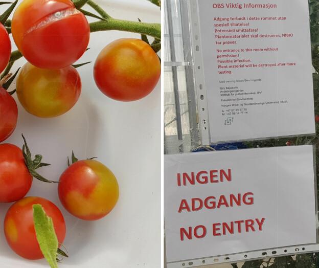 Smittefare på NMBU: Måtte destruere 660 kilo plantemateriale