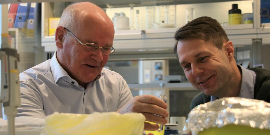 Professor emeritus Rolf Kristian Bergen sammen med Inge Bruheim, forskningssjef for Rimfrost.
