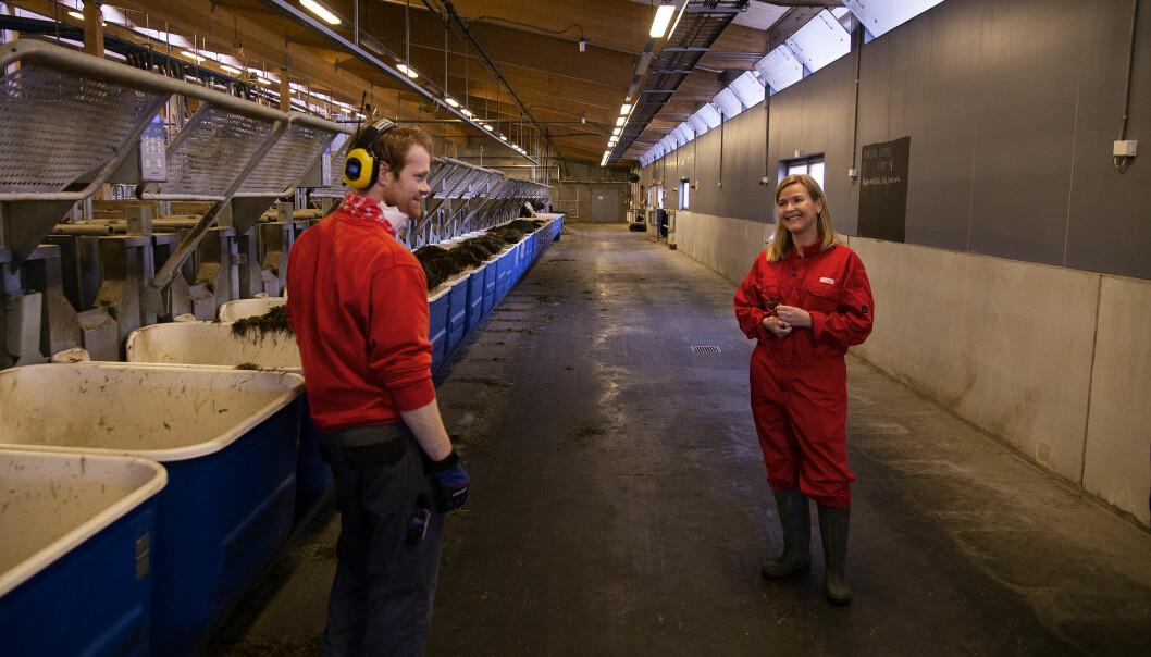Irma Osmak jobber hardt sammen med sine ansatte til det beste for dyr og samfunnskritisk forskningsarbeid på senter for husdyrforskning på NMBU. Her sammen med Marius.