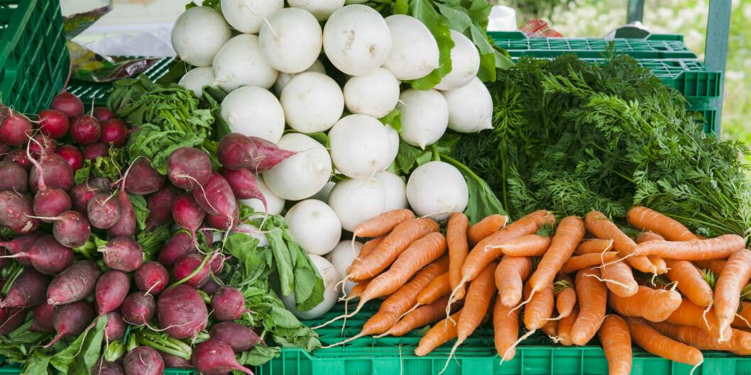 Grnnsaksbod på Toten med rikt utvalg av friske grønnsaker: gulrot, neper, reddiker.  Foto: Kai Jensen / NTB scanpix