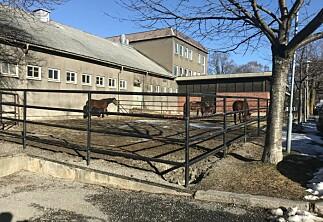 Ødelagte heste-tarmer har kostet minst 17,5 millioner