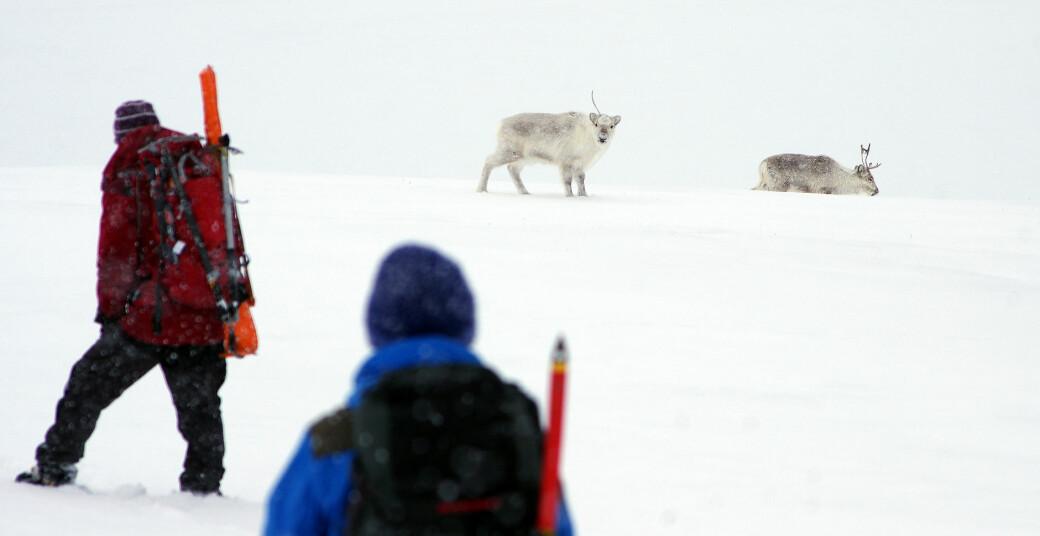 Feltarbeid står sentralt i undervisningen ved UNIS på Svalbard