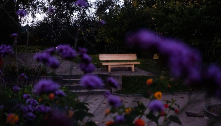 Carl Von Linné-benken i Botanisk hage.