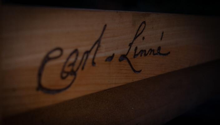 Carl Von Linné har satt sin signatur på benken i Oslo. Blir benken fjernet?
