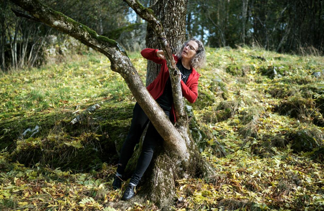 Anne Sverdrup-Thygeson. Professor i bevaringsbiologi på Institutt for Naturforvaltning ved NMBU. Ås.