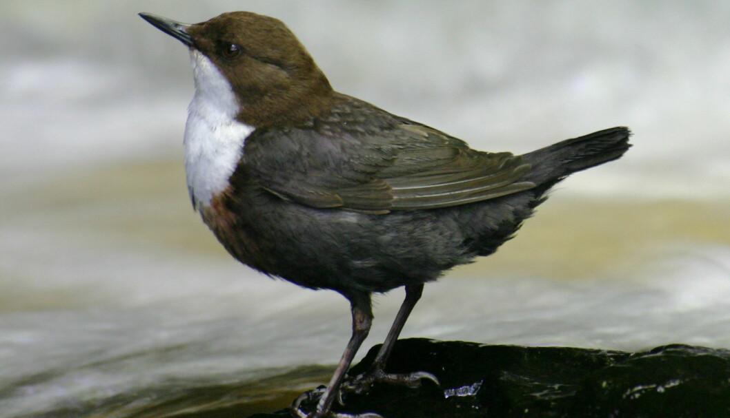 Hvilken fugl er dette?
