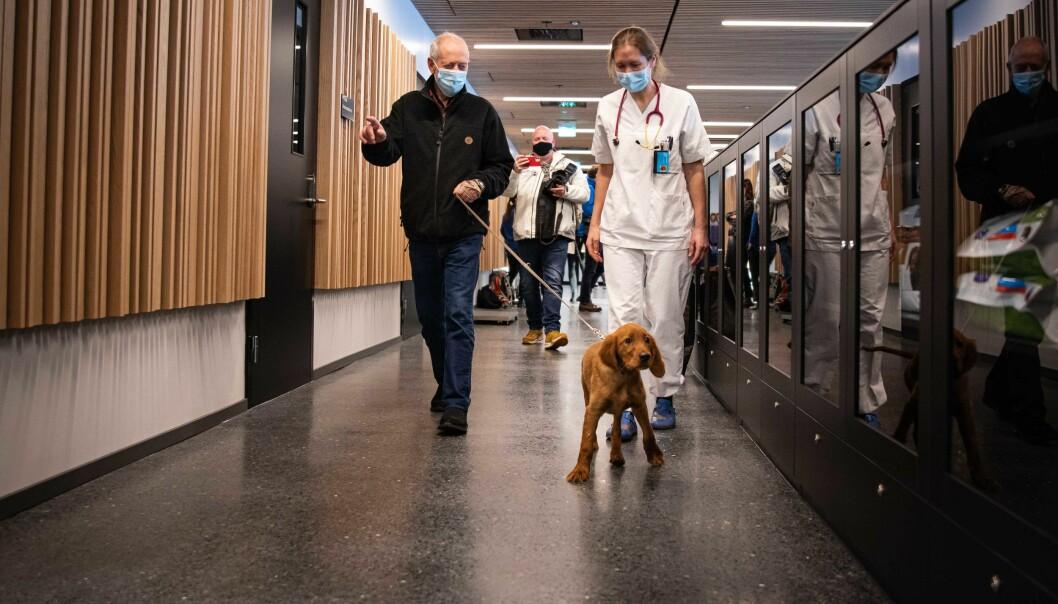 Stor ståhei for første kunde på det nye dyresykehuset ved universitetet i Ås. Balder (3 måneder), eier John Schau og behandlende dyrlege Heidi Sjetne Lund.