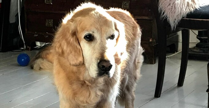 Forskning med røtter hos UiT kan hjelpe hunder med kreft