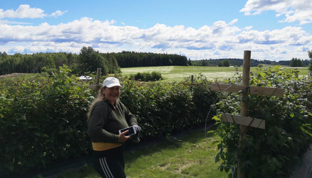 NMBU-student Miranda Dørum på jobb for Bringebærlandet.