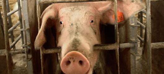 NMBU opptrer som kjøttindustriens universitet