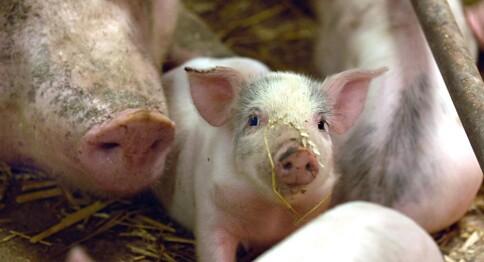 Ti tiltak for bedre dyrevelferd