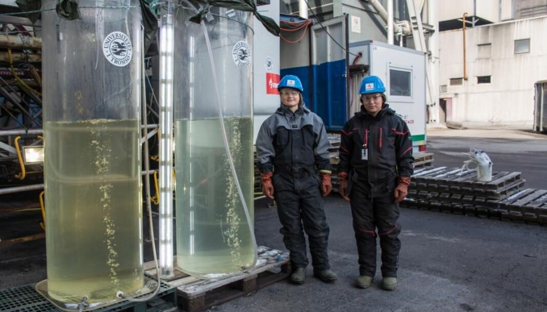 OECD trekker fram Grønn plattform som en «mission» i Norge. UiT og smelteverket Finnfjord AS har fått midler gjennom ordningen og har vist at alger kan være løsningen på lønnsom CO2-fangst og utnyttelse. Her er UiT-forskerne Nerea Johanna Aalto og Gunilla Eriksen ved algetankene på Finnfjord smelteverk.