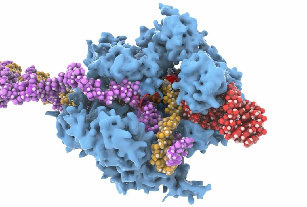 — En tilfeldig og grensesprengende oppdagelse av nyere dato er Emmanuelle Charpentiers og Jennifer A. Doudnas oppdagelse av den såkalte 'genetiske saks', en teknikk for genredigering (også kjent som CRISPR) som har revolusjonert forskningen innen molekylærbiologi og genetikk og førte til at de fikk nobelprisen i kjemi i 2020, skriver innleggsforfatterne.